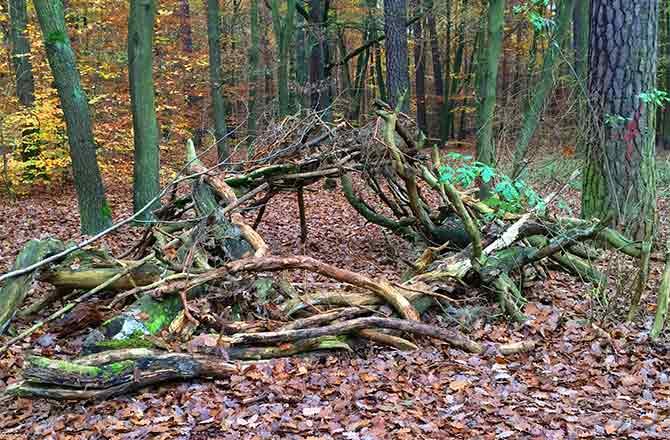 waldspielmitholzstaemmen » Kita am Südfeld
